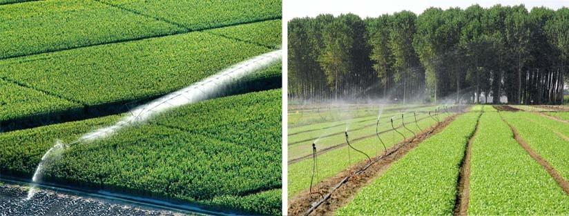 Consorzio di Bonifica Delta del Po Irrigazione Irrigazione